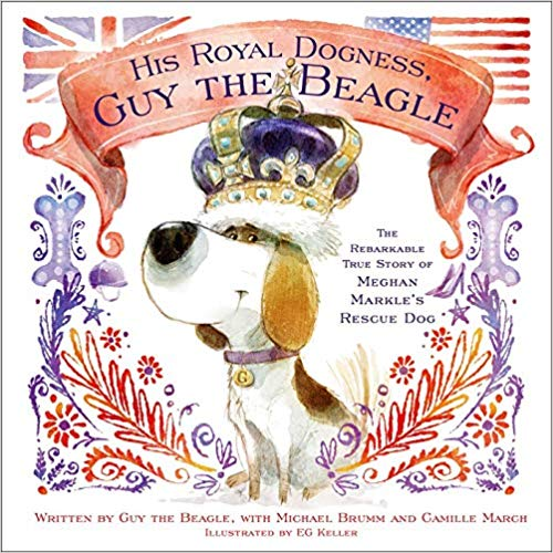 His Royal Dogness Guy the Beagle